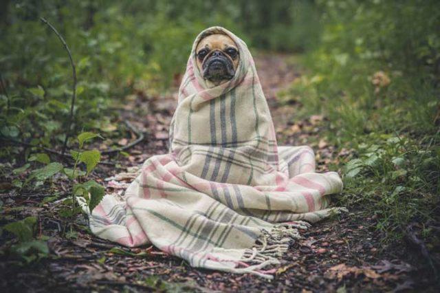 demenz-hund